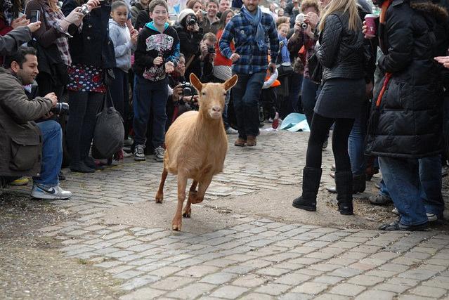 Cherie Blair To Herd Goats Over London Bridge