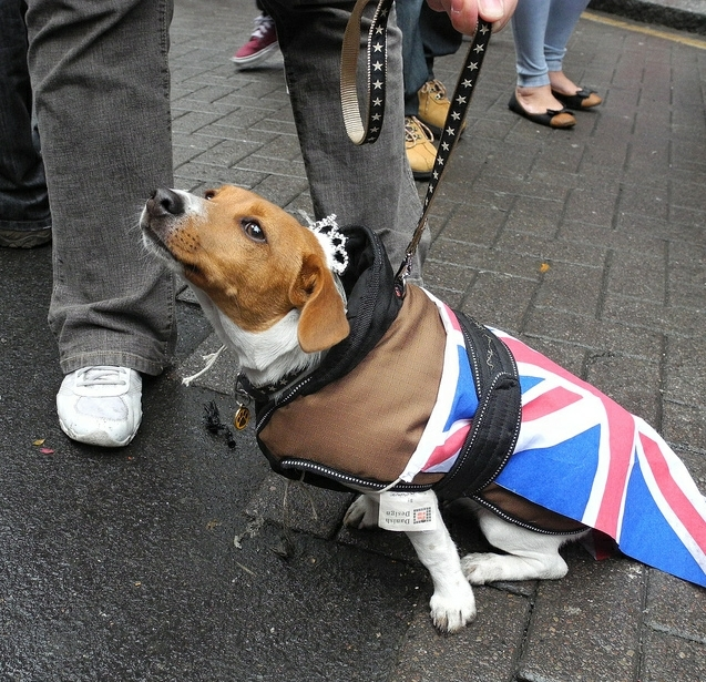 Patriotic dog in a tiara, spotted in Leather Lane Market / photo by Stephen*Iliffe