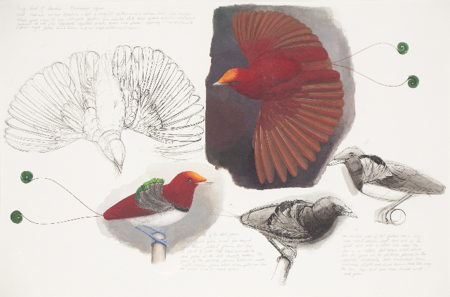 Elizabeth Butterworth, King bird of paradise. Courtesy Jerwood drawing prize
