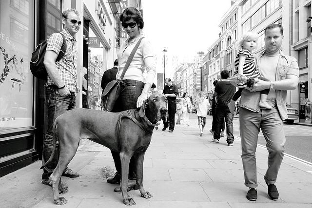 Big dawg, by Paul Steptoe Riley