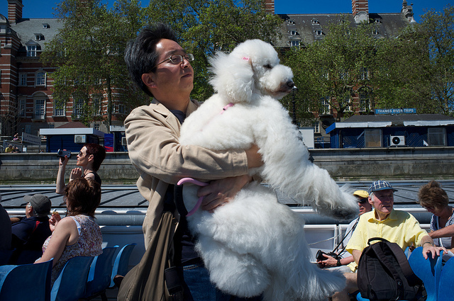 Yup, it's a man carrying a massive poodle, by Paul Treacy