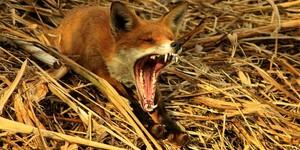 Art Review: British Wildlife Photography @ Horniman Museum