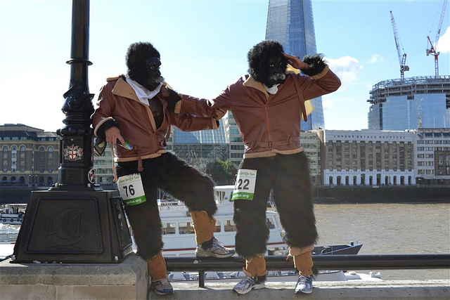 In Pictures: The Great Gorilla Run 2012
