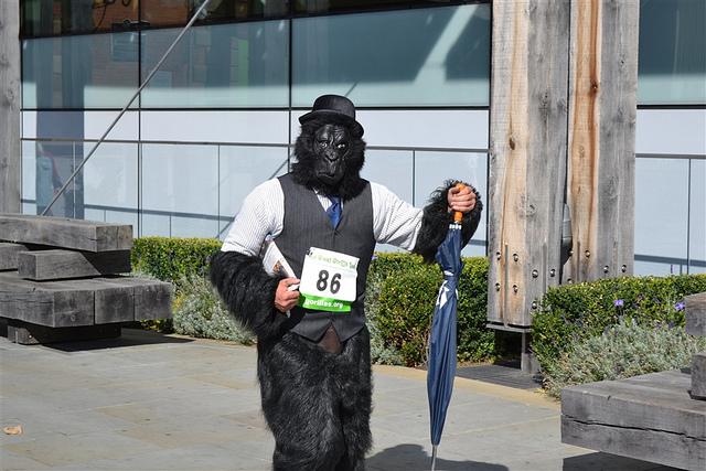 City gorilla