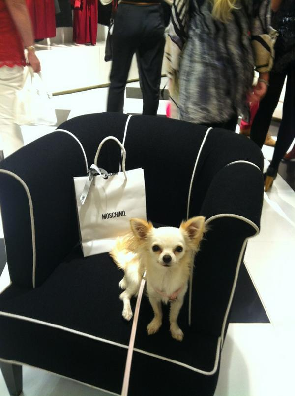 Doggie fashionista at the Moschino party by Anna Namiki
