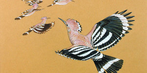 Art Preview: The Natural Eye @ Mall Galleries