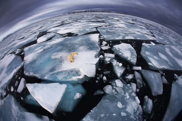 Winner.  Anna was on a boat in Svalbard � an archipelago midway between mainland Norway and the North Pole � when she saw this polar bear at around four in the morning. It was October, and the bear was walking on broken-up ice floes, seemingly tentatively, not quite sure where to trust its weight. She used her fisheye lens to make the enormous animal appear diminutive and create an impression of �the top predator on top of the planet, with its ice world breaking up�. The symbolism, of course, is that polar bears rely almost entirely on the marine sea ice environment for their survival, and year by year, increasing temperatures are reducing the amount of ice cover and the amount of time available for the bears to hunt marine mammals. Scientists maintain that the melting of the ice will soon become a major problem for humans as well as polar bears, not just because of rising sea levels but also because increasing sea temperatures are affecting the weather, sea currents and fish stocks.
