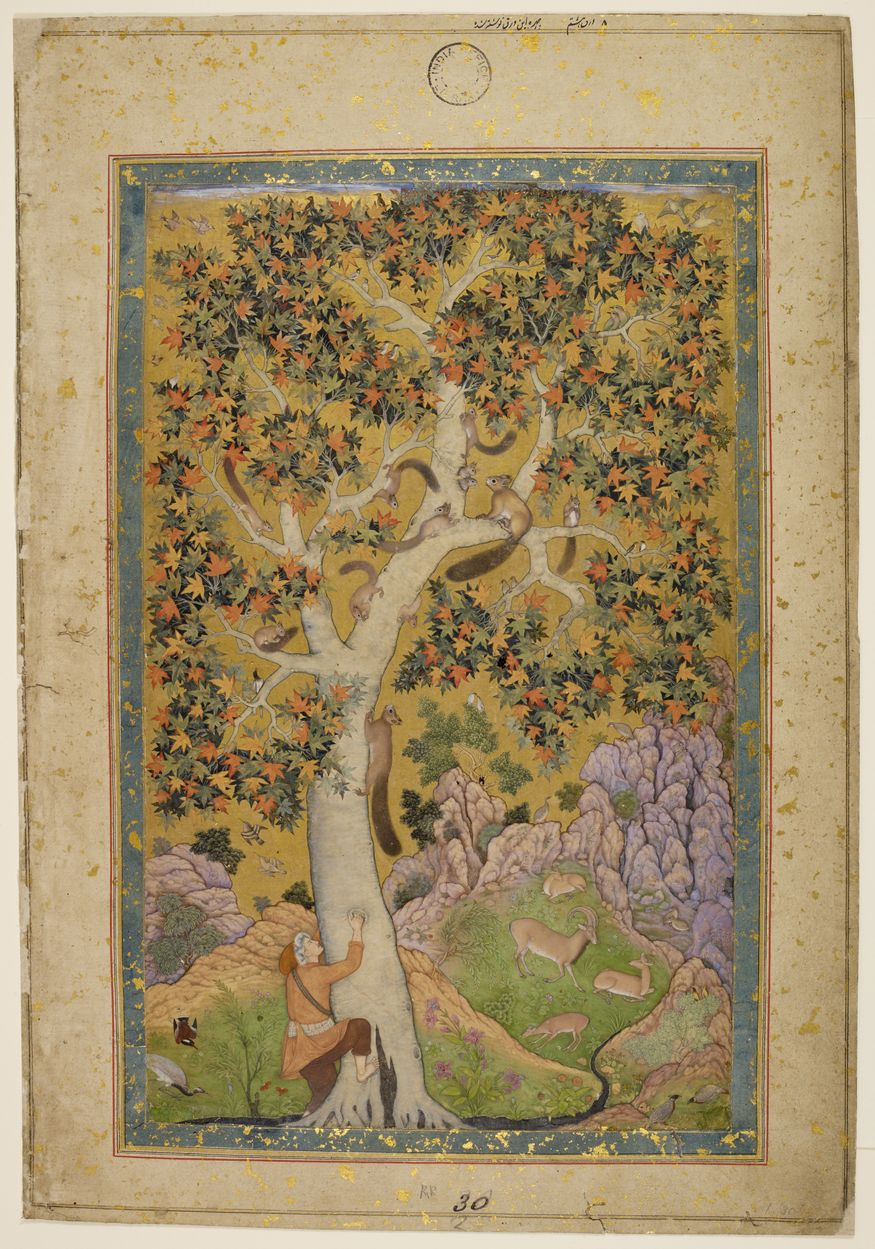 Squirrels in a Plane Tree. Artwork from Mughal India: Art, Culture and Empire (c) British Library Board