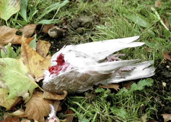 C.A. Halpin, Dead Bird. Image courtesy of the artist and A Brooks Art.