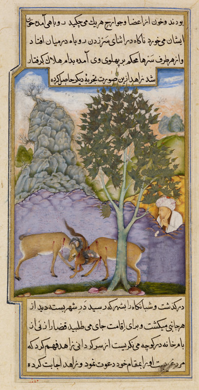 The devotee sees the fox crushed between the fighting goats, from the Anvar-i Suhaili (Lights of Canopus), 1604-11, Illustration ascribed to the artist Mirza Ghulam, 1604-05 (c) British Library Board
