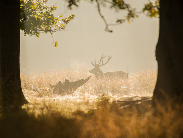 An early morning in Richmond Park this week, by Alex Witt