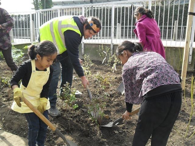 Help Plant Trees In Ruskin Park, Lambeth
