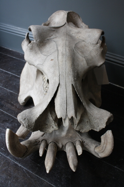 Hippo Snout, Photo by Heather McCalden. Image courtesy of Black Rat Projects.