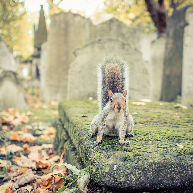 Squirrel in the graveyard, by Robin Maumgarten