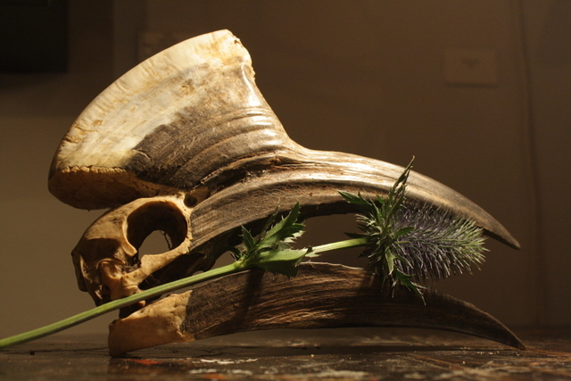 Toucan Skull and Thorns. Image courtesy of Black Rat Projects.