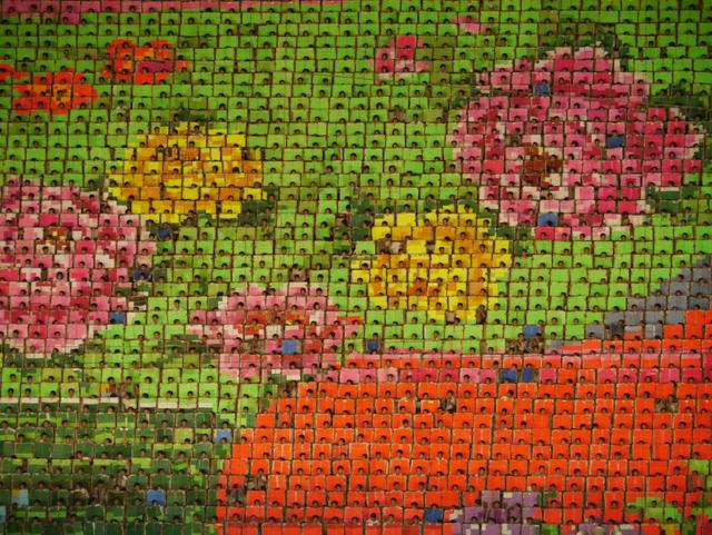 ARIRANG Mass Celebrations, Pyongyang, North Korea Mosaic of Kim-Jong-Ilia Begonia, specially created to bloom only on his birthday February 16 © Jeremy Hunter 2011 ww.jeremyhunter.com