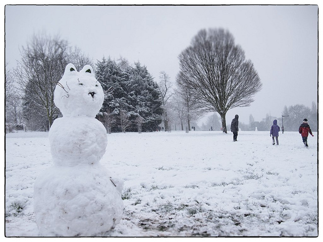 Snow cat by Kate in Brixton
