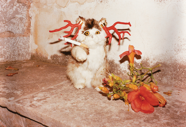 Photographer: Juergen Teller Title: Cat smoking, Hydra, 2012 © Juergen Teller