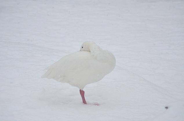 Is there anything cuter than birds in snow? By Sloetry