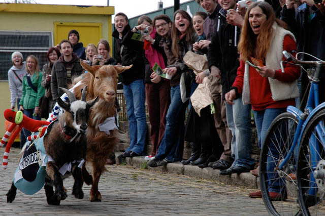The 2013 Oxford And Cambridge Goat Race