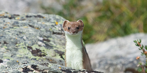 The Next Stop Is...Stoats Nest Village