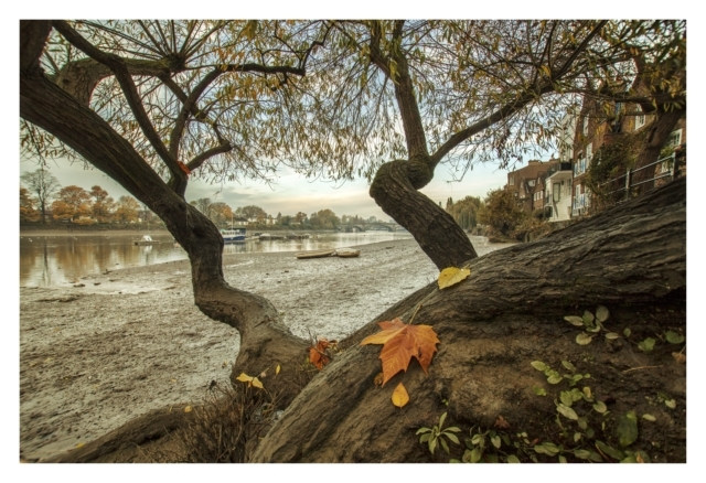 Autumnal Fantasy.. Looking through an old willow tree back towards Kew Bridge