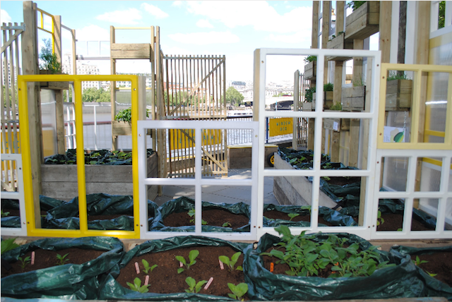A garden made from reclaimed windows, by Wayward Plants.