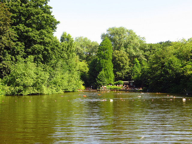 Hampstead mixed pond by Laura Nolte
