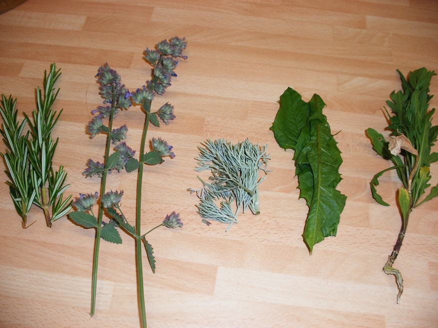 Part of our morning's haul: rosemary, catnip, artemisia, dandelion, rocket