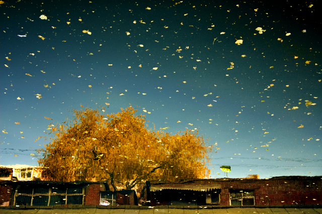 Gold Autumn, Han Bing. Image courtesy Hua Gallery