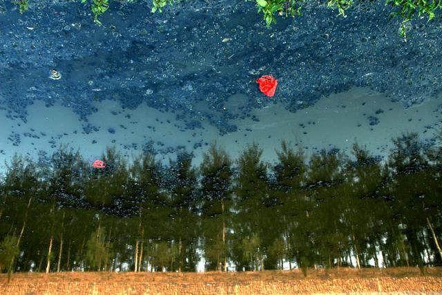 Grove I, Han Bing. Image courtesy Hua Gallery