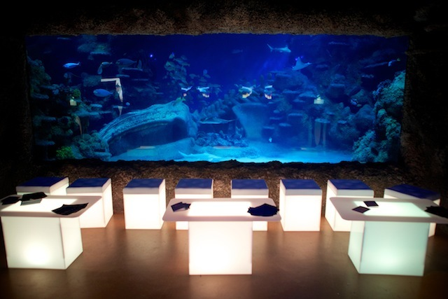 Try the London Aquarium for an underwater catch up with friends
