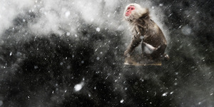 Stunning Images In Wildlife Photographer Of The Year