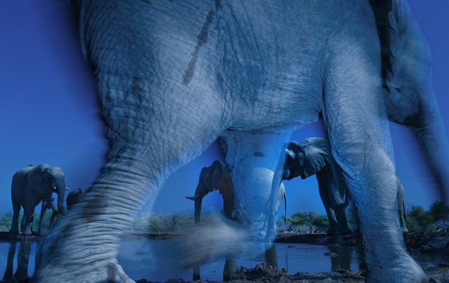 Essence of elephants Winner: Animal Portraits and Overall Winner Greg du Toit. Wildlife Photographer of the Year 2013