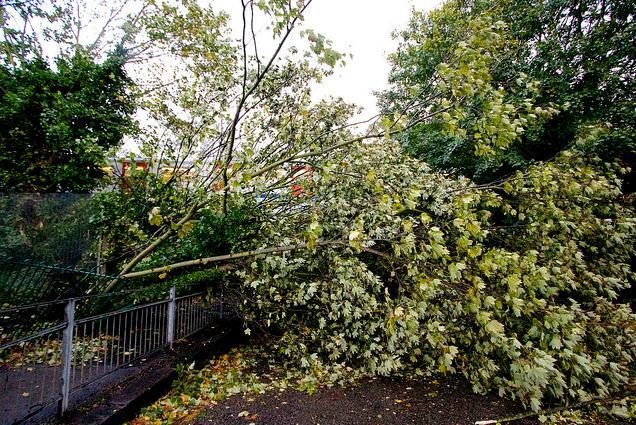 Tree down in Chiswick / photo by Ian Wylie
