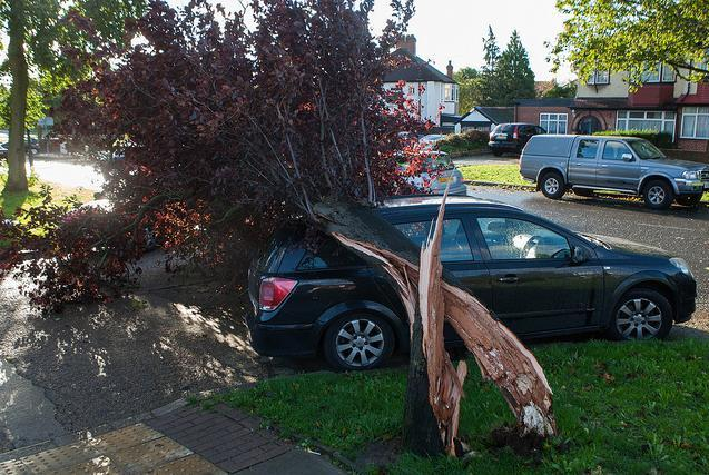 Tree on a car in Northolt / photo by sinister pictures
