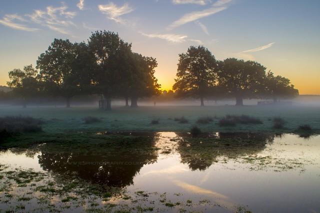 Low mist over Richmond Park