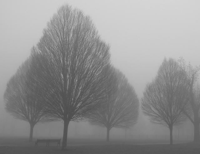 foggy_111213