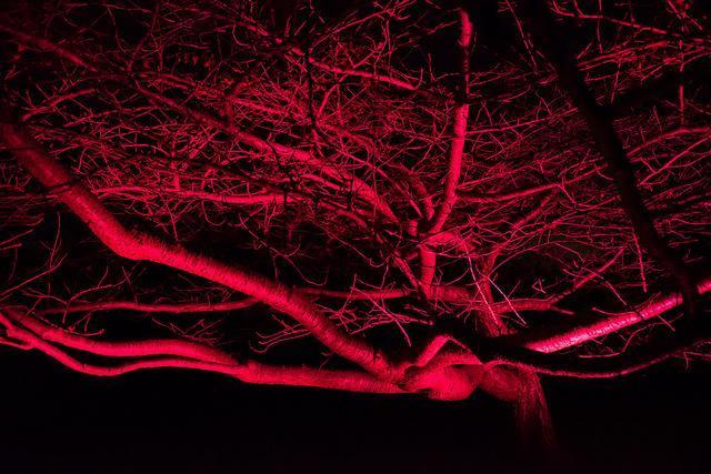 redtree_021213