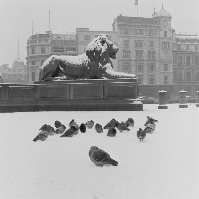 Trafalgar Square, 1957 / © Henry Grant Collection / Museum of London