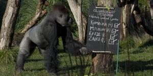 In Pictures: London Zoo Conducts Annual Stocktake