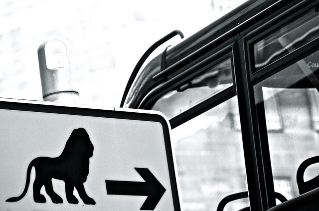 Lions this way, Southbank by Stephanie Sadler via flickr