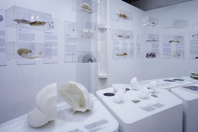 Photograph of Exploration Architecture's Designing with Nature exhibition at The Architecture Foundation, London