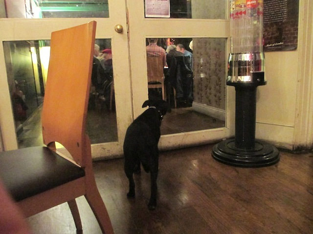 A local woofster, locked out of someone's meetup.