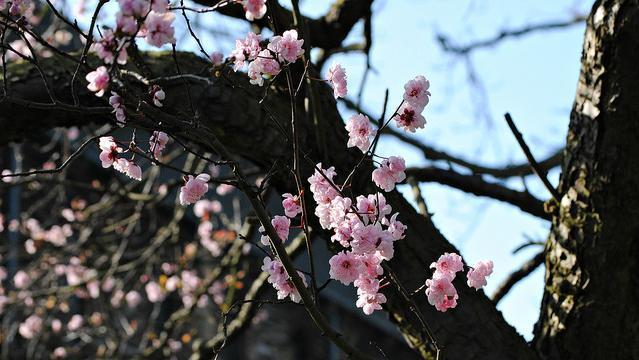 blossom_090314