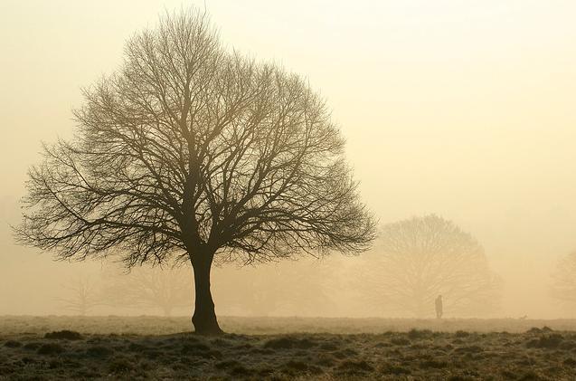 fog_140314