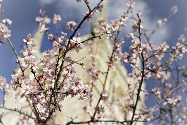 Blossom and Southwark Cathedral by Marco Beghi