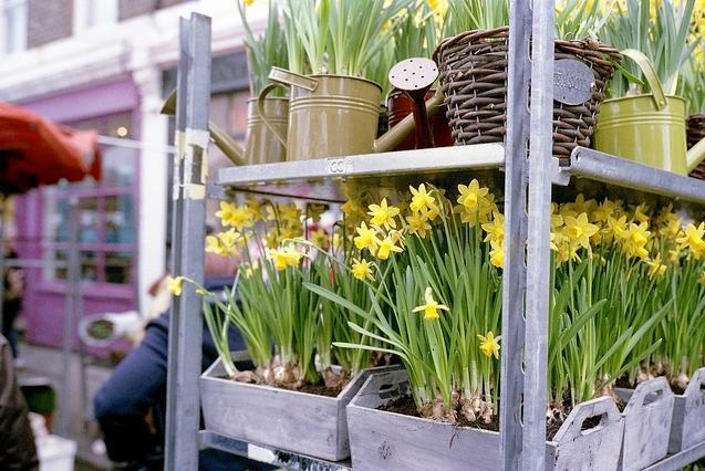 Buy your own flowers at Columbia Road Market by Paul Sweeney