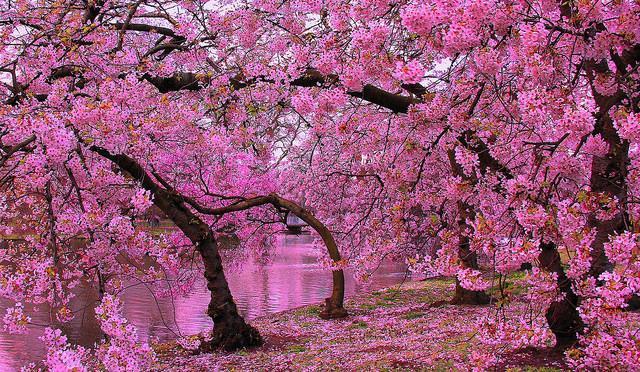 blossom_010414