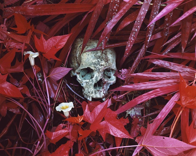 Richard Mosse, Of Lilies and Remains, 2012. Image courtesy the artist.